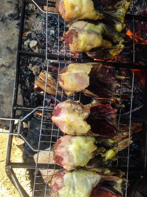 mutton birds (1 of 1)